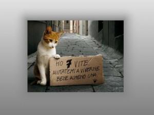 byman Le 7 Vite del Gatto
