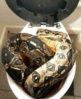 img blog toilet snake