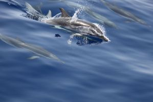 Delfini Sicilia2010 x1024
